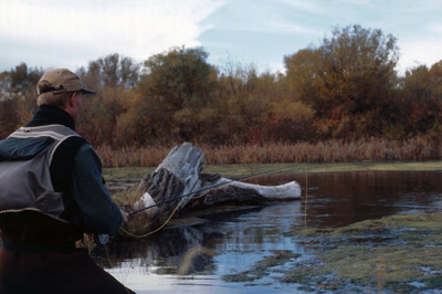 Jeff Murray relies on Ed Shenk's Crickets in trout streams all across the country.